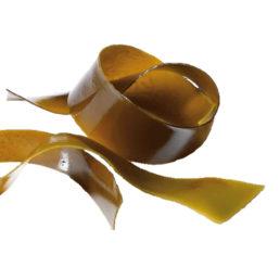 Algas pardas frescas a granel ( Kg ): Kombu de Azúcar (Saccharina latissima)